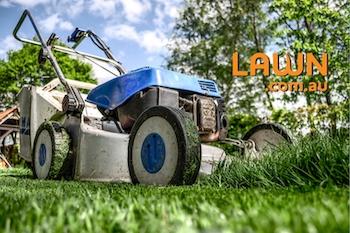 Lawn.com.au